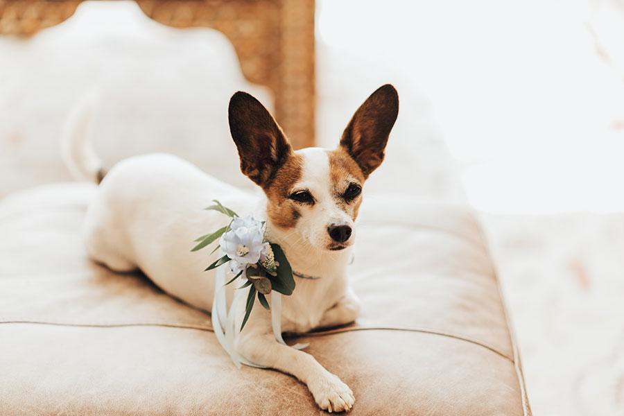 Dog collar decoration
