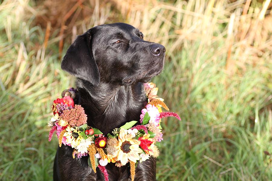 Dog collar garland